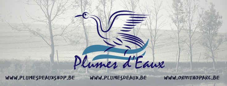 logo triple plumes d'eaux